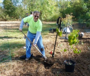 Event adviser Mike Steinberger is proudly wearing his OA Trail Crew shirt while planting trees.