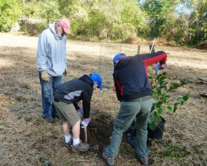 Troop 44 is working hard to plant trees.