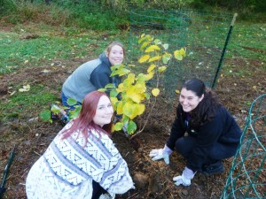 WCU Alpha Phi Omega members planting trees.